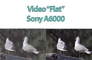 Video flat A6000 mini